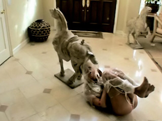 Scorching hot European babe receives tied up and fucked in public